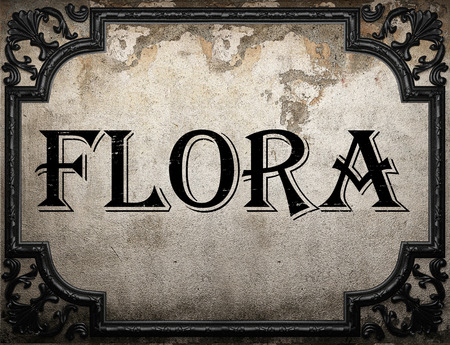 the flora: flora word on concrette wall Stock Photo