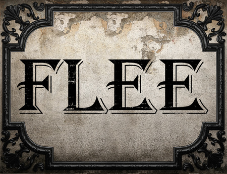 flee: flee word on concrette wall