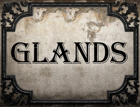 glands: glands word on concrette wall Stock Photo