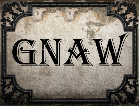 gnaw: gnaw word on concrette wall