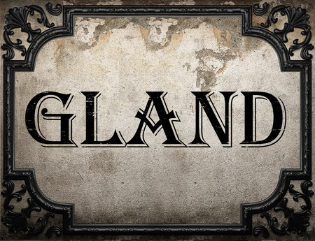 gland: gland word on concrette wall