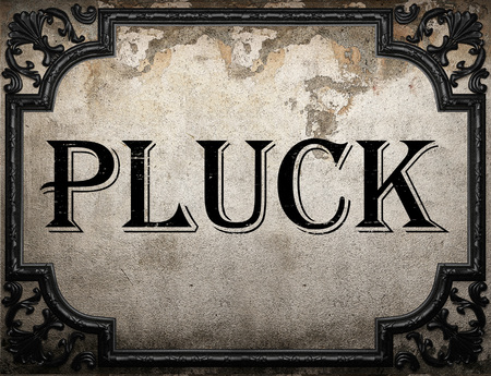 pluck: pluck word on concrette wall