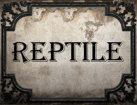 reptile word on concrette wall Stock Photo
