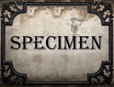specimen: specimen word on concrette wall