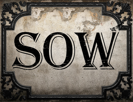 sow: sow word on concrette wall Stock Photo
