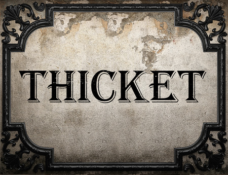 thicket: thicket word on concrete wall Stock Photo
