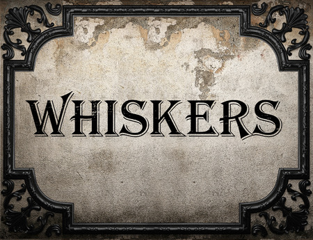 whiskers: whiskers word on concrete wall Stock Photo