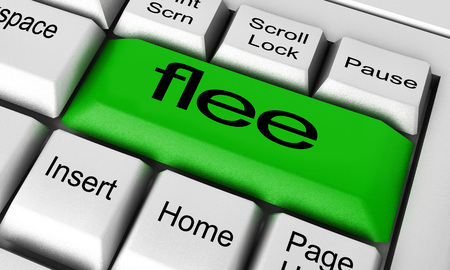 flee: flee word on keyboard button Stock Photo