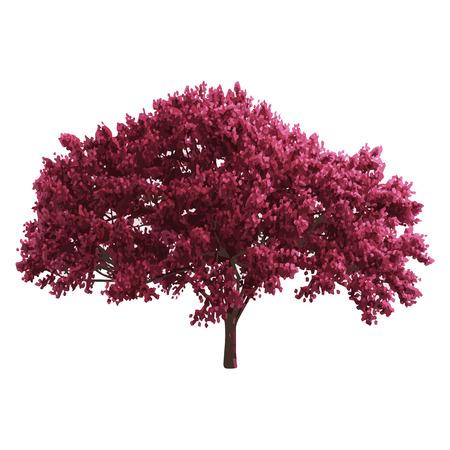 big tree: realistic vector tree isolated