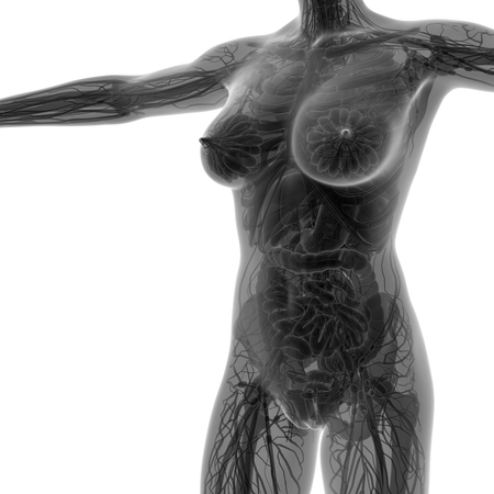 appendix ileum: science anatomy of human body in x-ray with all organs Stock Photo