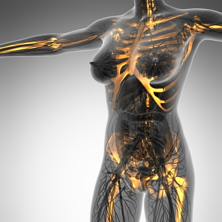 spine x ray: science anatomy of human body in x-ray with glow skeleton bones Stock Photo