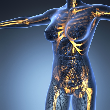 x stand: science anatomy of human body in x-ray with glow skeleton bones Stock Photo