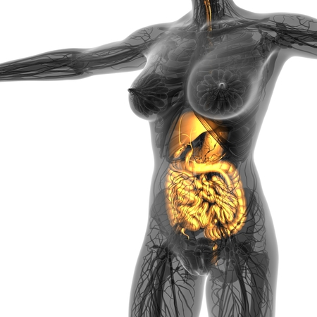 science anatomy of human body in x-ray with glow digestive system Stock Photo