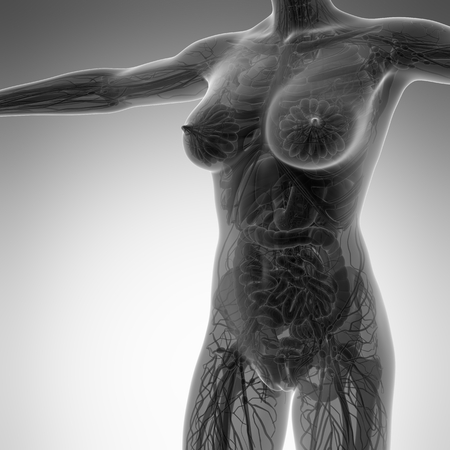 ileum: science anatomy of human body in x-ray with all organs Stock Photo