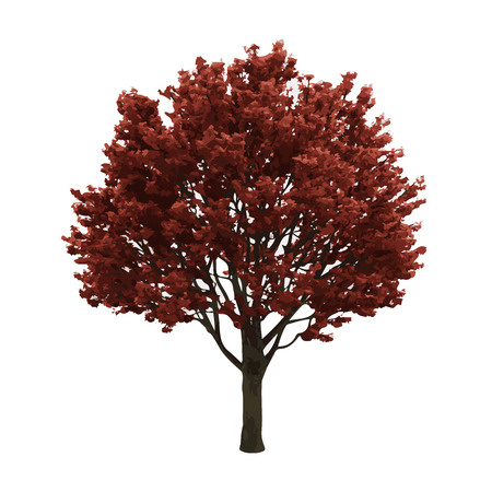 large tree: realistic vector tree isolated