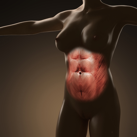 rectus: science anatomy of human body with glow rectus abdominis