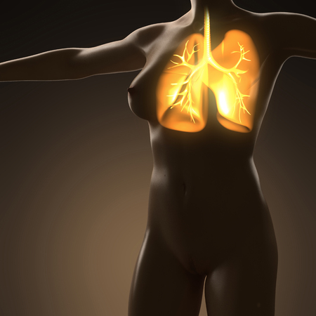 airways: science anatomy of human body with glow lungs