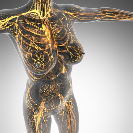 heart bypass: science anatomy of human body in x-ray with glow blood vessels Stock Photo