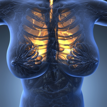 frontal lobe: science anatomy of woman body with glow lungs Stock Photo
