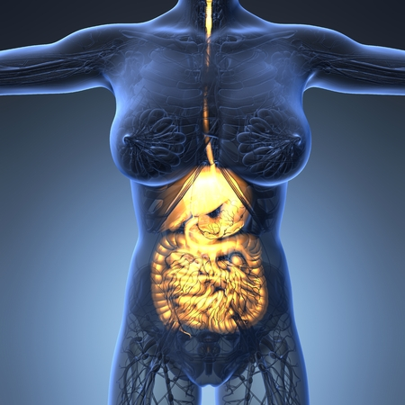 science anatomy of woman body with glow digestive system