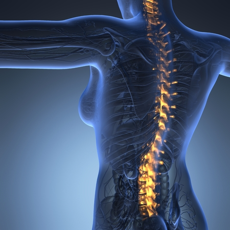 vertebral column: Human backache and back pain with an upper torso body skeleton showing the spine and vertebral column