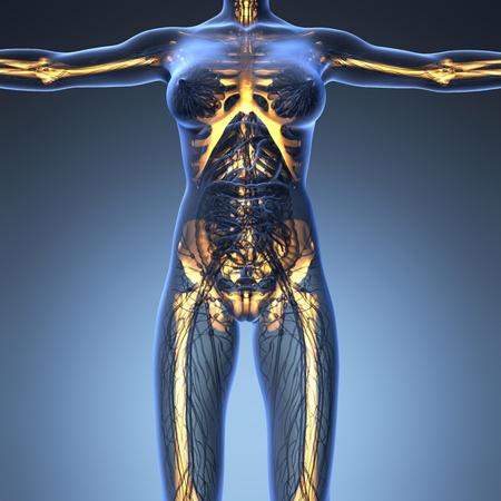 anatomía ciencia del cuerpo humano en rayos X con los huesos del esqueleto resplandor