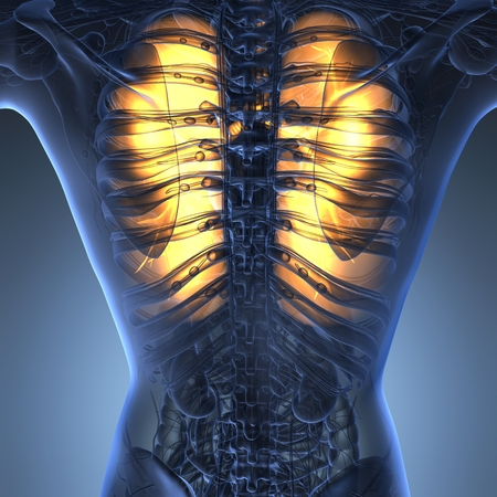 lung alveoli: science anatomy of woman body with glow lungs Stock Photo