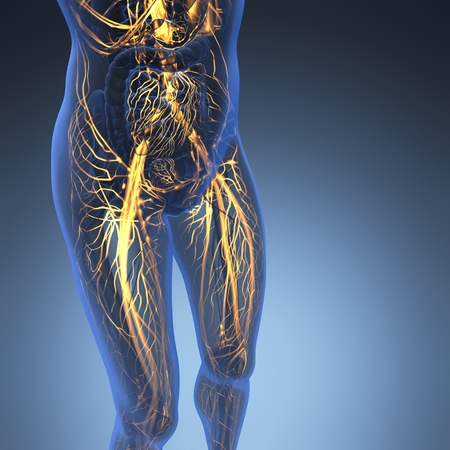 pulmonary trunk: science anatomy of human body in x-ray with glow blood vessels Stock Photo