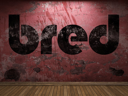 bred: bred word on red wall Stock Photo