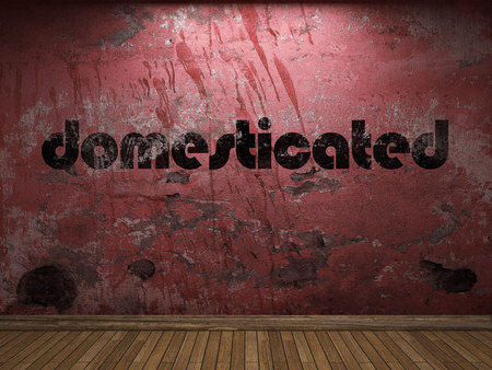 domesticated: domesticated word on red wall
