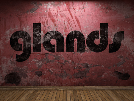 glands: glands word on red wall
