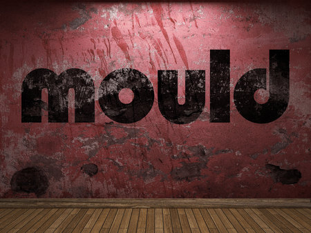 mould: mould word on red wall