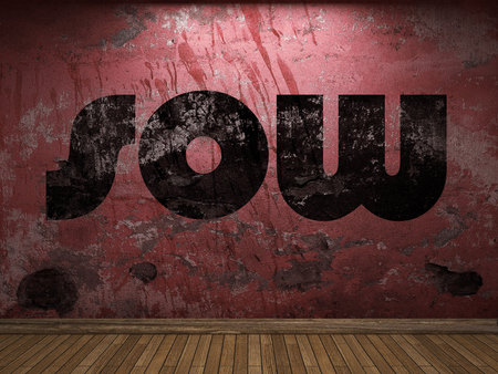 sow: sow word on red wall Stock Photo