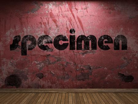 specimen: specimen word on red wall