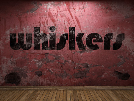 whiskers: whiskers word on red wall