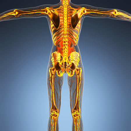 science anatomy of human body in x-ray with glow skeleton bones Stock Photo