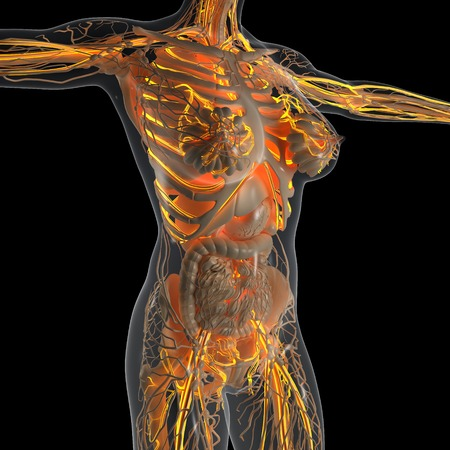 vena: science anatomy of human body in x-ray with glow blood vessels Stock Photo