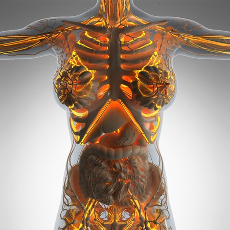 infarct: science anatomy of human body in x-ray with glow blood vessels Stock Photo