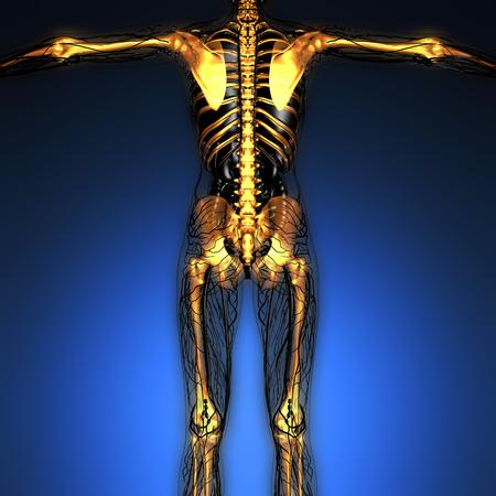 science anatomy of human body in x-ray with glow skeleton bones Stock Photo