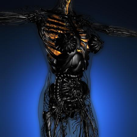 Wissenschaft Anatomie Der Frau Körper Mit Glow Lungen Lizenzfreie ...
