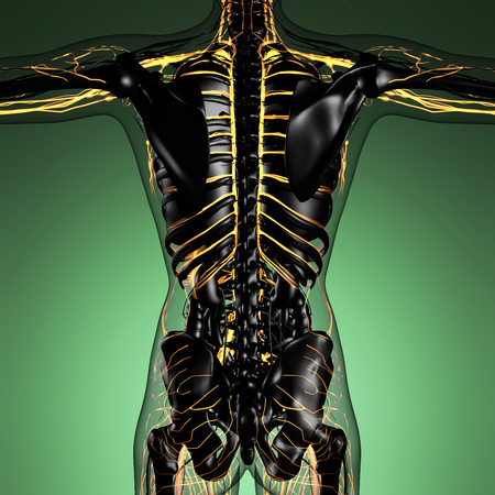 cava: science anatomy of human body in x-ray with glow blood vessels Stock Photo