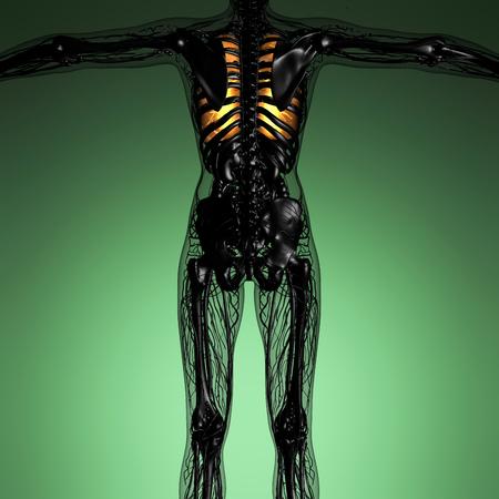 alveolos: anatomía ciencia del cuerpo de la mujer con los pulmones resplandor