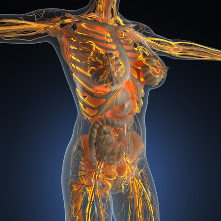 science anatomy of human body in x-ray with glow blood vessels Stock Photo