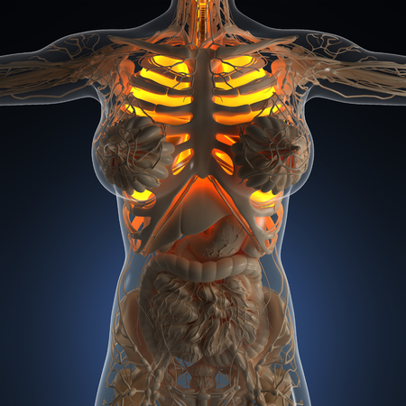 sinuses: science anatomy of woman body with glow lungs Stock Photo