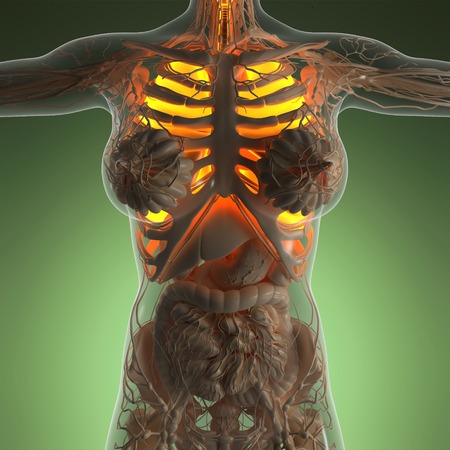science anatomy of woman body with glow lungs Stock Photo