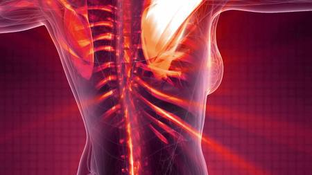Wissenschaftlicher Anatomiescan des menschlichen Körpers mit sichtbaren Skelettknochenkel Standard-Bild