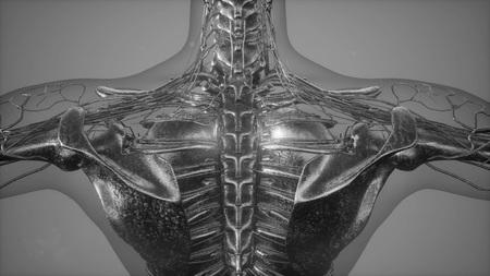 radiographic scan of homan skeletal bones