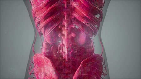 science anatomy tomography scan of human body Stock Photo