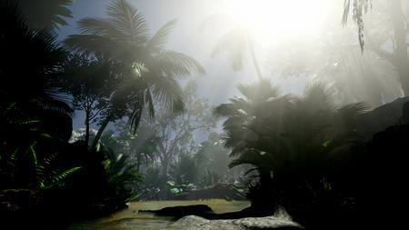 sunset beams through palm trees at jungle rainforest