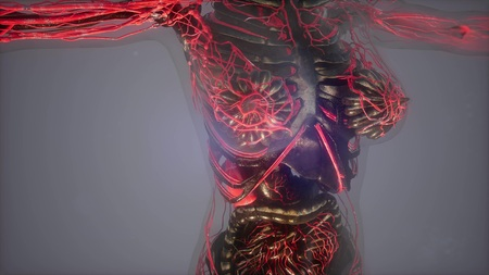 science anatomy of human body in x-ray with glow blood vessels Stockfoto